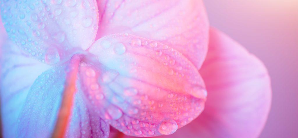 fleur-mouille-le-lubrfication-vaginale